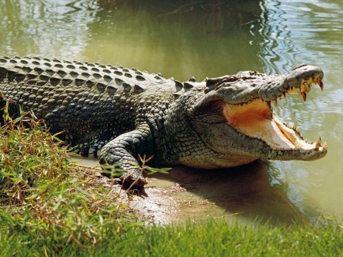 Nằm mơ thấy cá sấu phản ánh những lo lắng và tổn thương mà người mơ đang phải gánh chịu