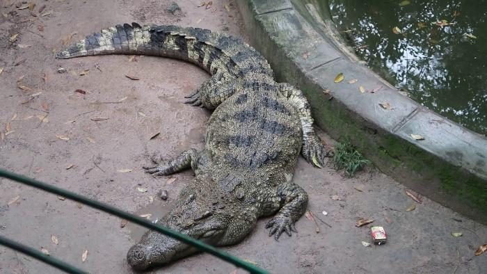 Mơ thấy hình ảnh con cá sấu trong sở thú đánh lô đề số 13 - 90