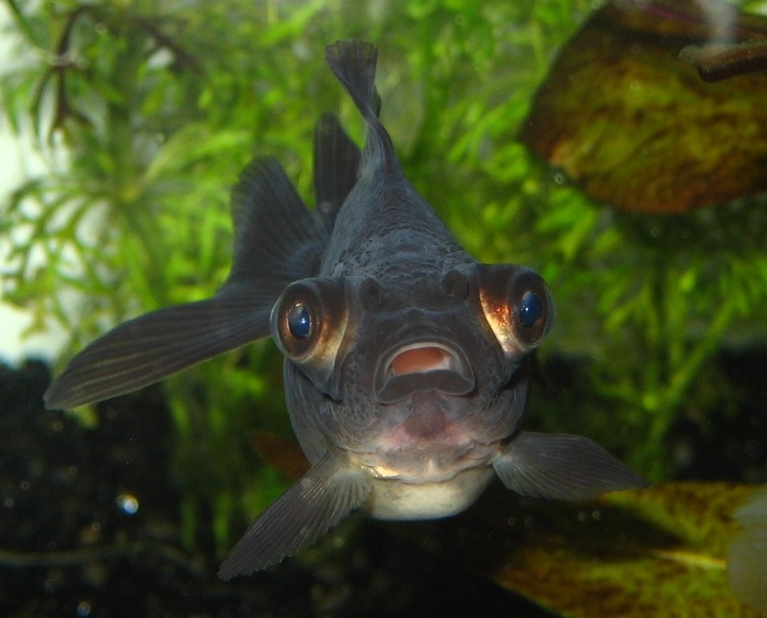 Nằm mơ thấy cá đen là một điều nhắc nhở với chủ nhân hãy cẩn thận với những người xung quanh