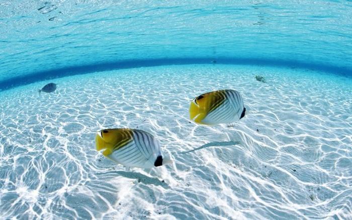 Đàn ông mơ thấy cá thì đánh con 33 - 39