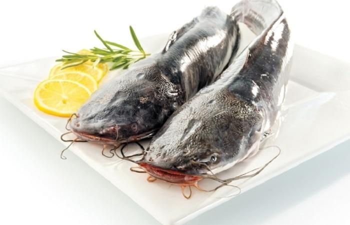 Việc mơ thấy cá trê và ăn nó là điềm báo bạn sắp gặp phải các kiện tụng, tranh chấp