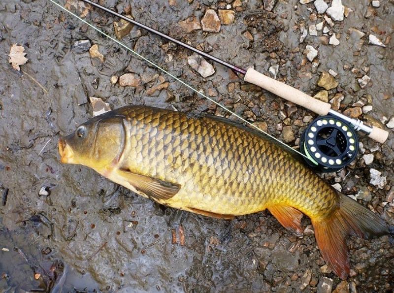 Mộng thấy mình câu cá chép trên cạn