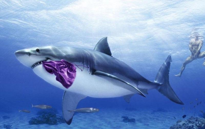 Chiêm bao thấy hai con cá mập gần gũi với nhau