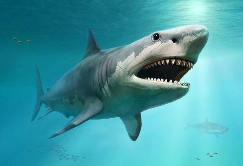 Mơ thấy đàn cá mập đi săn mồi
