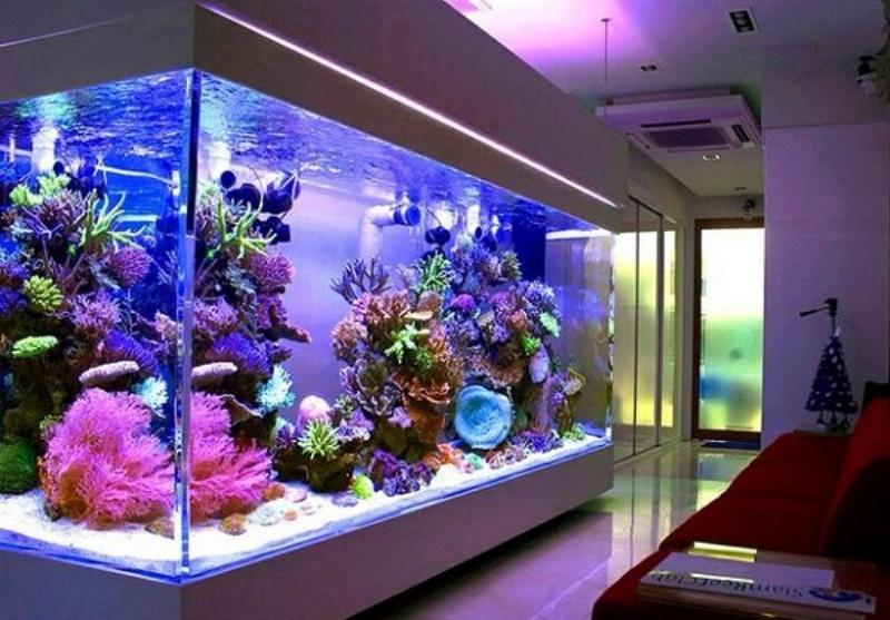 Hồ cá lớn có thể được bố trí trong nhà hay trong khuôn viên nhà với mục đích là trang trí
