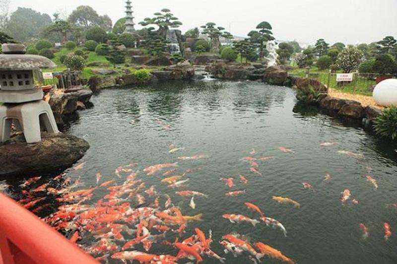 Nằm mơ thấy trong hồ cá lớn hiện đang có rất nhiều cá