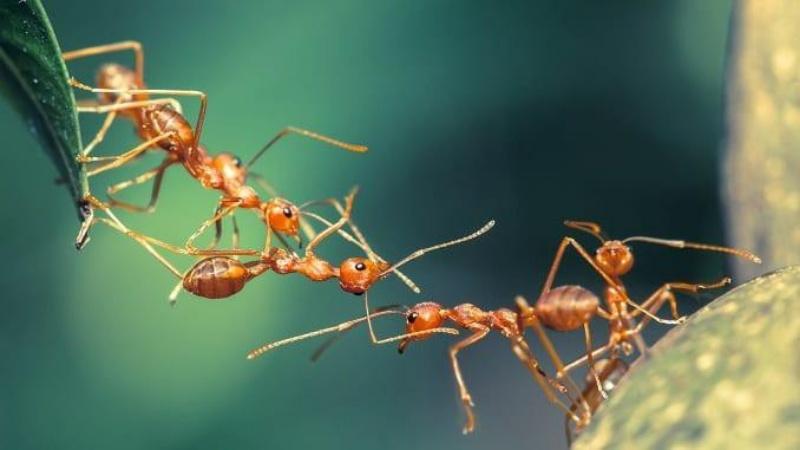 Mơ thấy con kiến mang điềm báo may mắn.