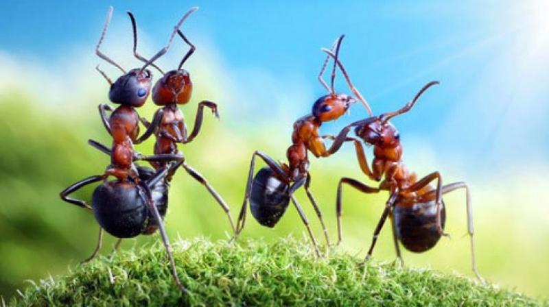 Nằm ngủ mơ thấy đàn kiến bò lên bàn chốt ngay số 11 - 21.